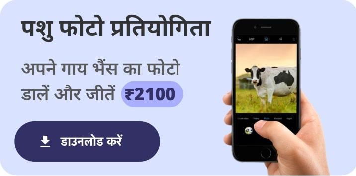 app-download
